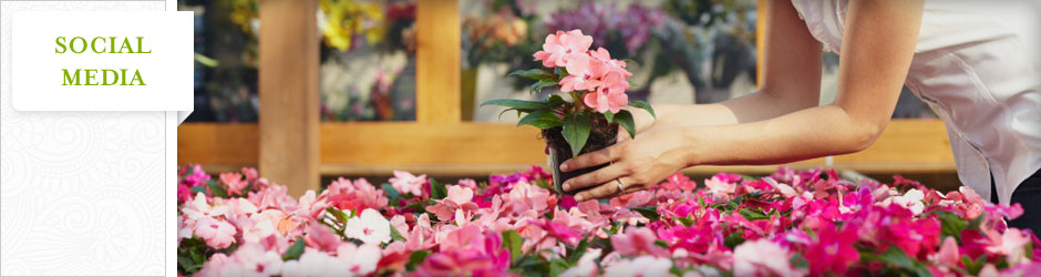 woman pick up flower at garden center